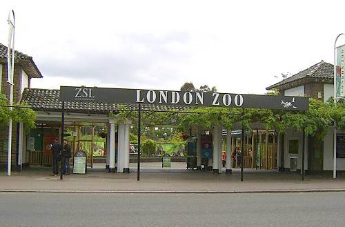 london _zoo_animals_photos_magazine