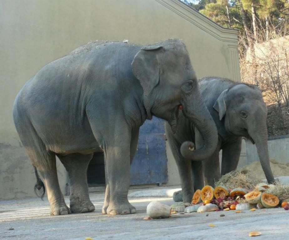 elephants-at-tbilisi-zoo